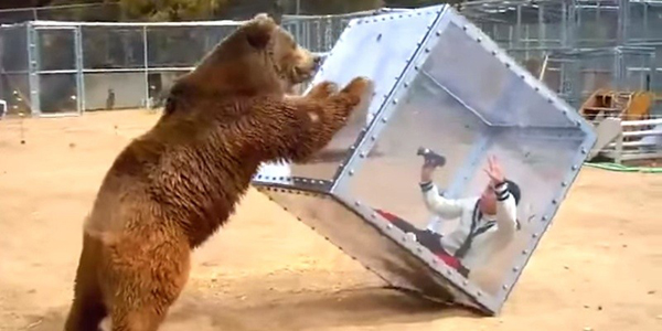 Bear vs. Girl In A Clear Box [VIDEO]