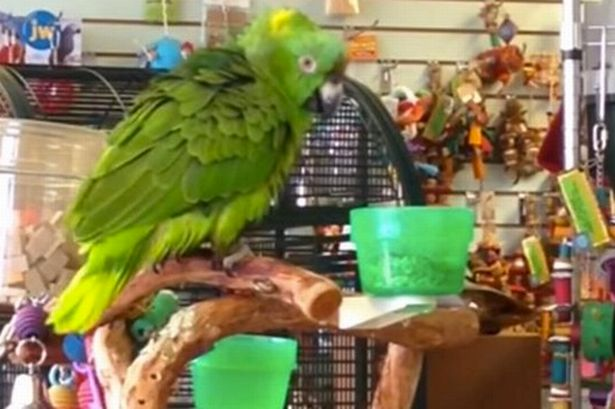 "Parrot Sings ""Everything Is Awesome"" from 'The Lego movie'"